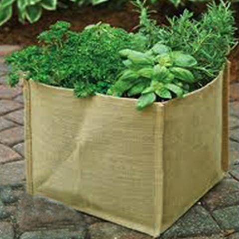JUTE PLANT BAGS